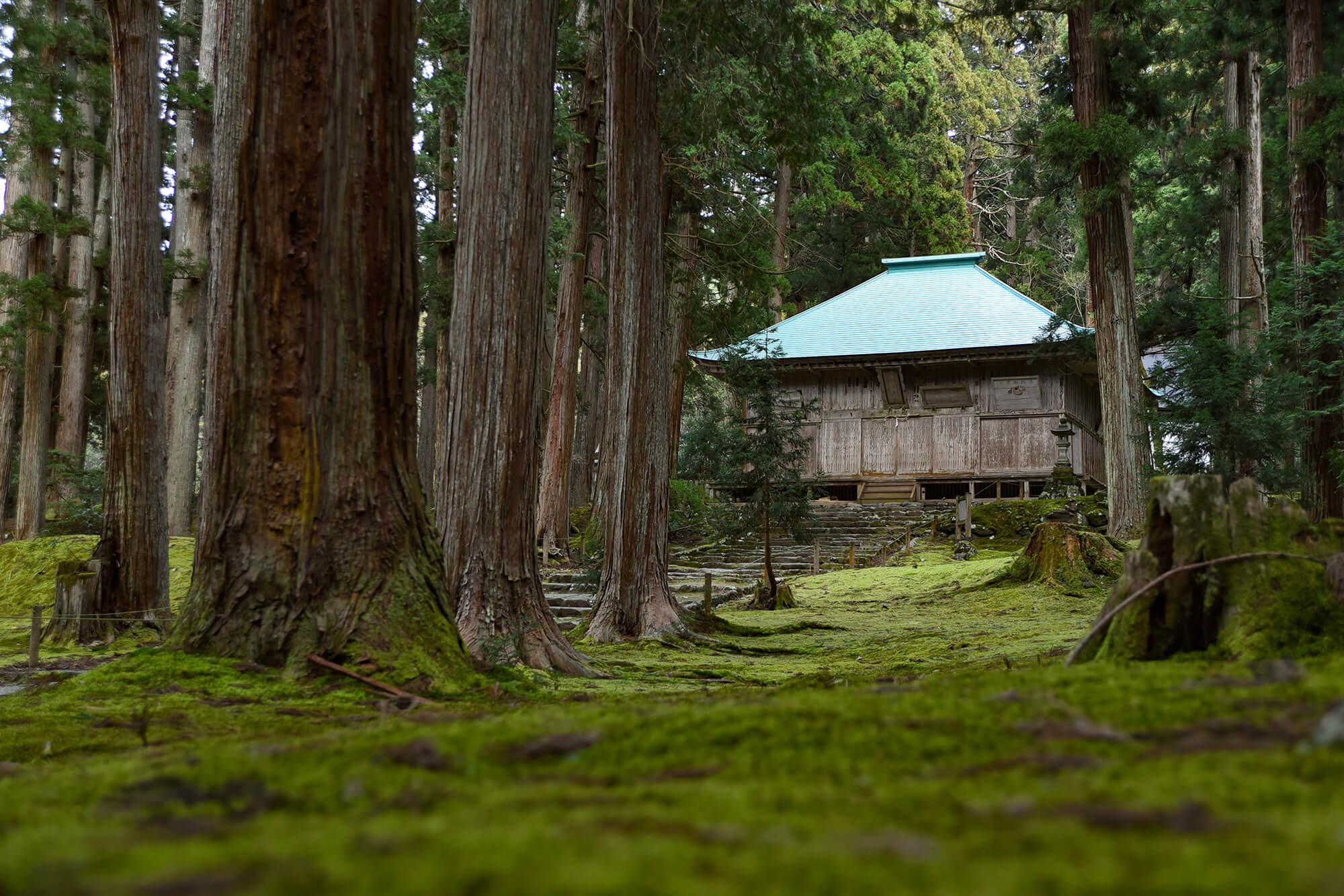 フォトスポットが満載!!一面を苔に覆われた美しさ神秘の苔寺